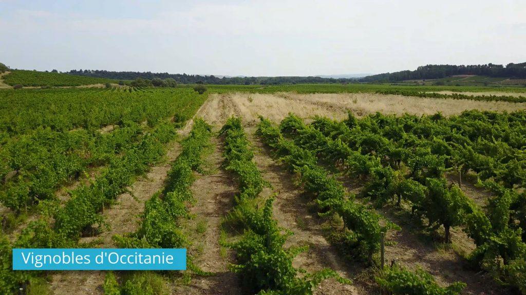 Vignobles d'Occitanie - Drone Proinfluent